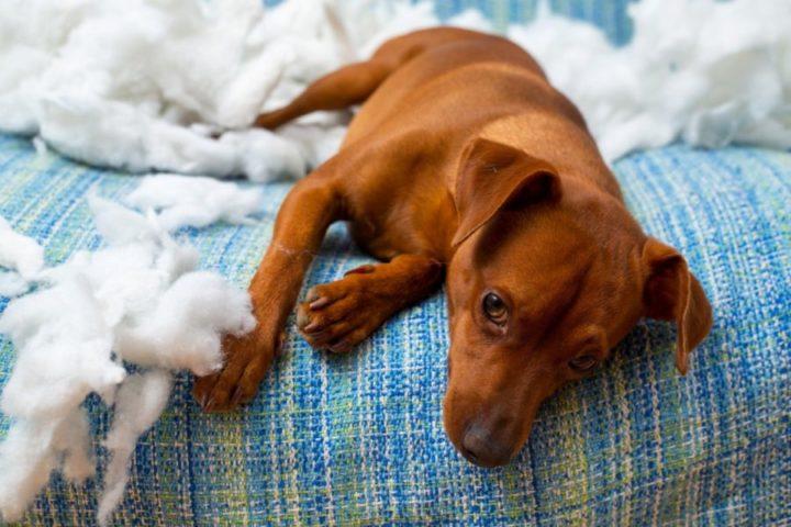 Botti di Capodanno, quest'anno i cani saranno meno soli